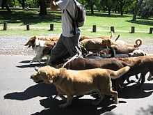 220px-Dog_walker_-_Buenos_Aires[1]
